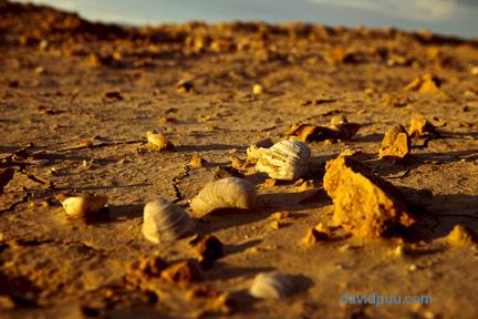 Desert Seascape